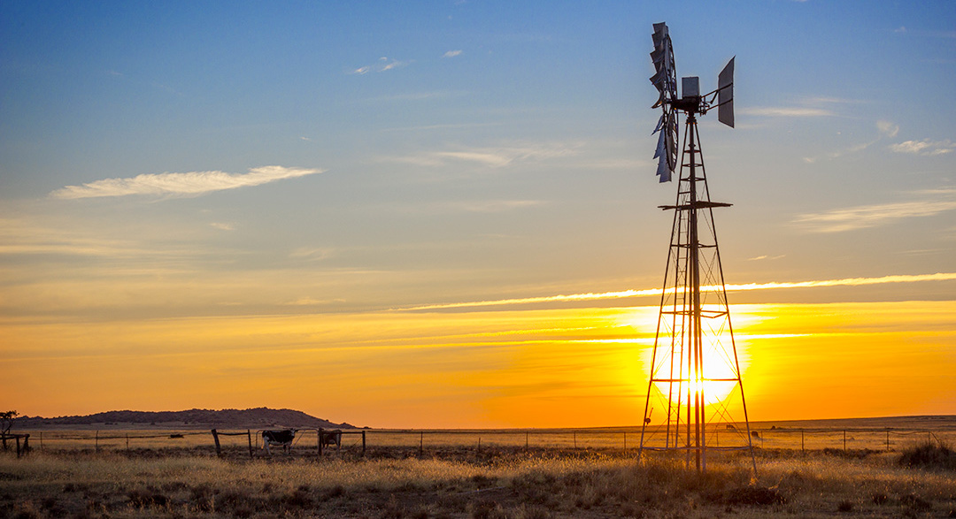 Karoo farm with windmill and cows at sunset