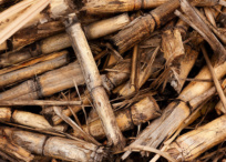 Organic waste in the form of bamboo offcuts